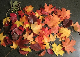 How to Preserve Fall Leaves by Crafty Journal