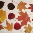 preserve-fall-leaves-after-ironing-310x238