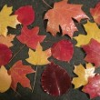 preserve-fall-leaves-done1-280x210