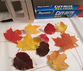 Crafty Journal - Preserve Fall Leaves