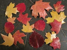 Preserve Fall Leaves
